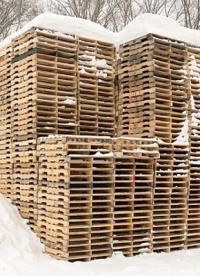 Meeldauw op uw houten pallets? Bestrijden doet u zo!