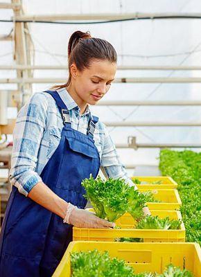 Zorg voor het gewas - verken containers, trolleys en andere oplossingen voor de landbouw